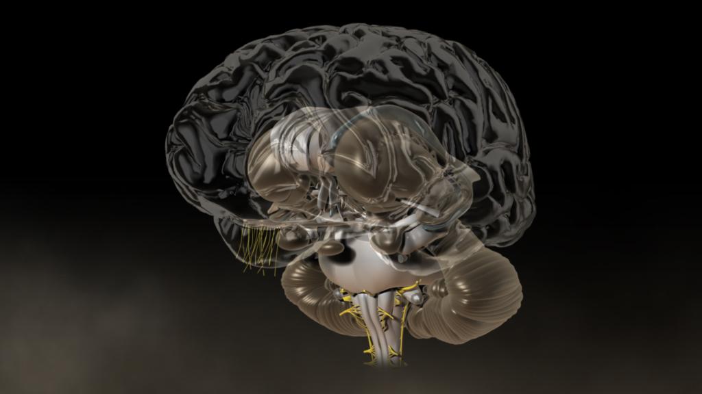 3D-Animation | Gehirn