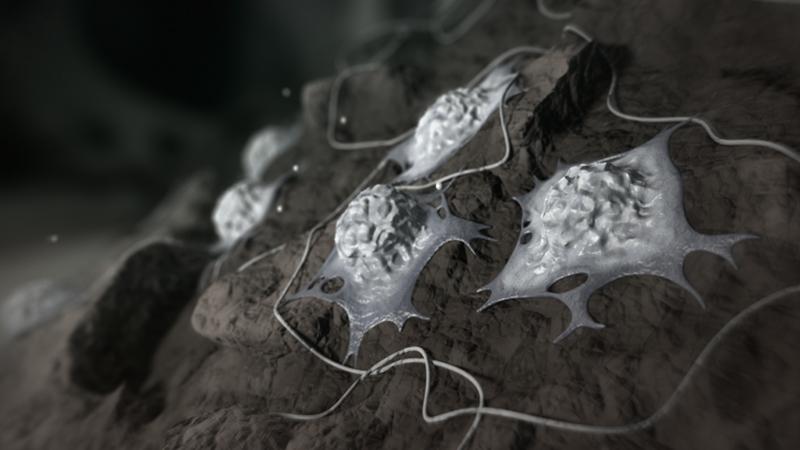 3D-Animationsfilm | Osteoblasten