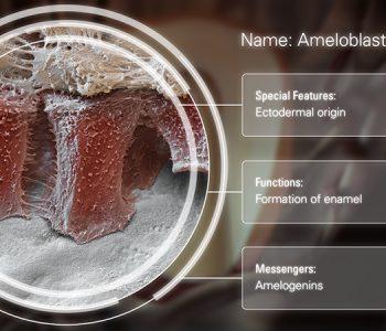 3D-Animationsfilm | Ameloblast