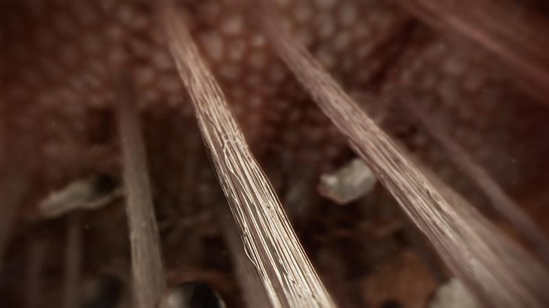 3D-Animationsfilm | Sharpey-Fasern