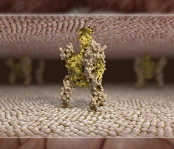 3D-Animation | Wissenschaftsfilm, RANKL