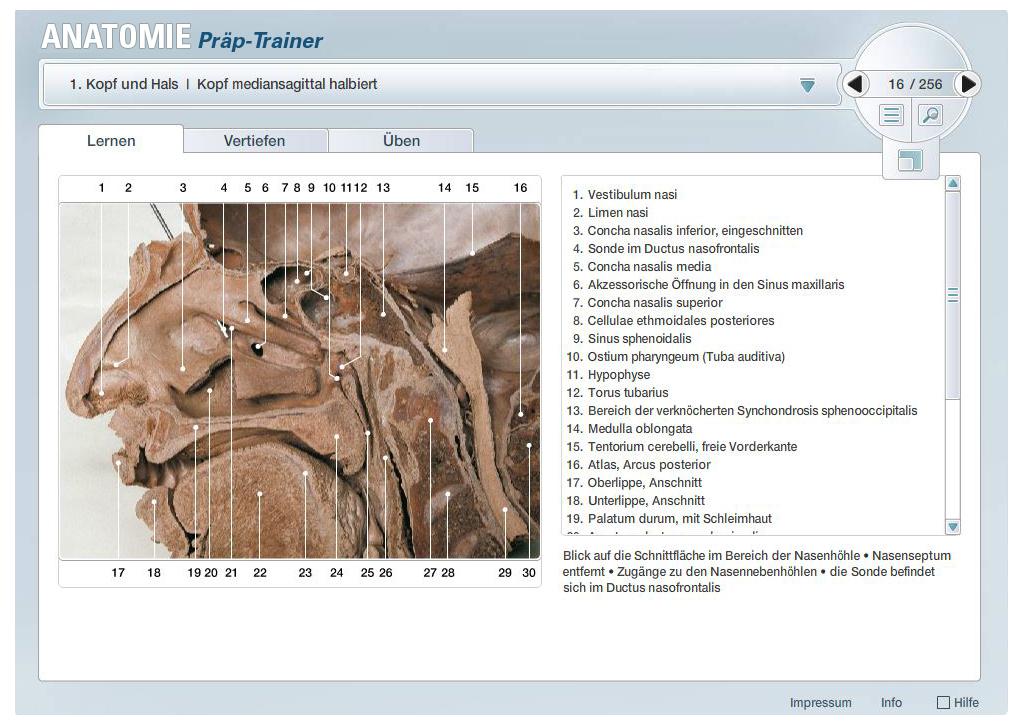 Anatomie für Studenten - interActive Systems Berlin