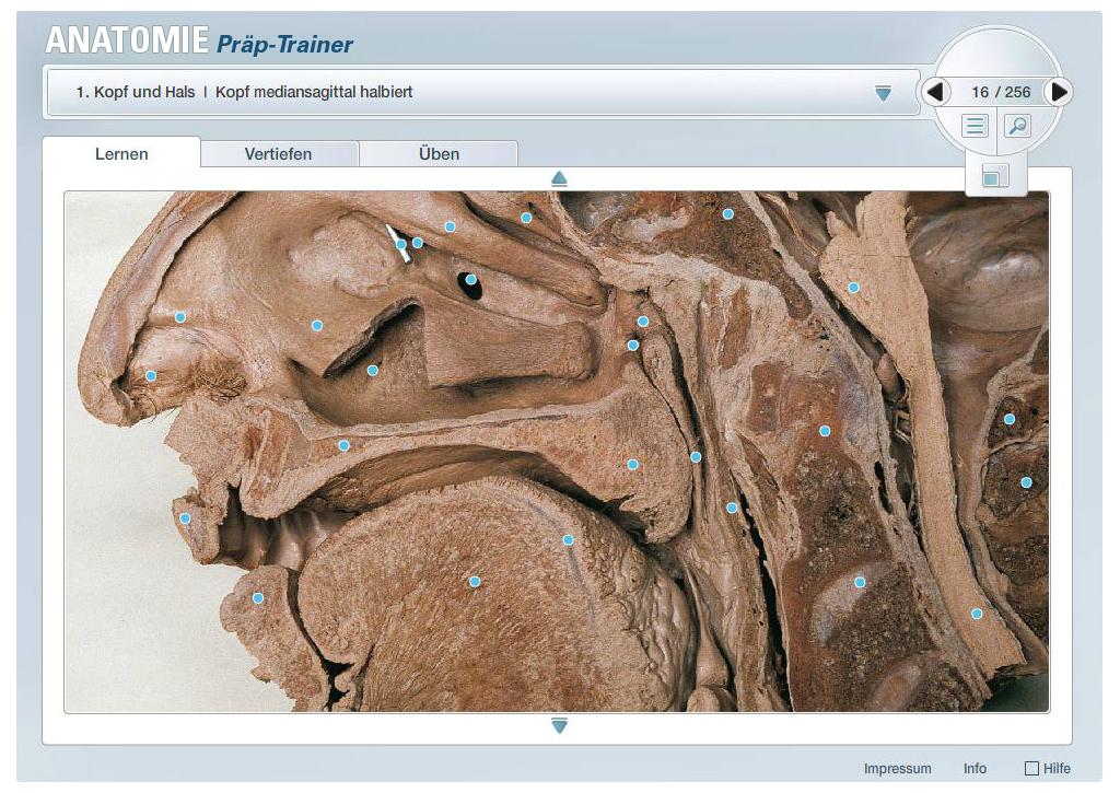 E-Learning Applikation | Anatomie-Kurs für Studenten