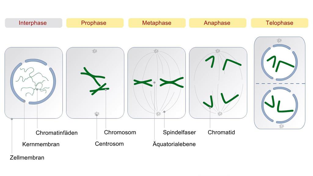 Medizinische 2D-Animation | E-Learning + WBT