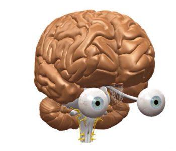 VR Gehirn | Drehmodell