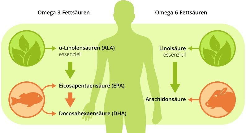 interActive Systems | Fettsäuren